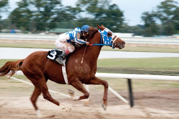 secretariat best sports movie ever made 2014 images