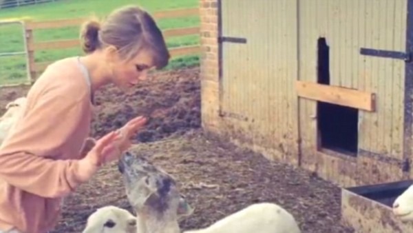 taylor swift dealing with sheep on farm 2015 gossip