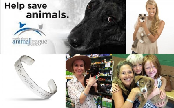north shore animal league get your rescue on images 2015