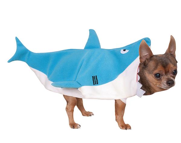 shark dog