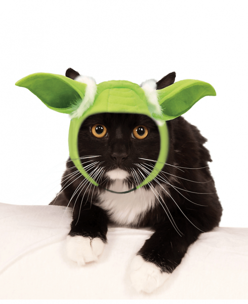 star wars cat yoda ears