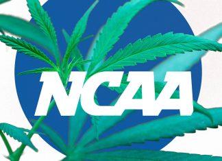 ncaa need to revisit its marijuana policy 2015
