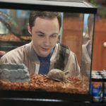 sheldon finds perfect turtle for big bang theory 2015sheldon finds perfect turtle for big bang theory 2015