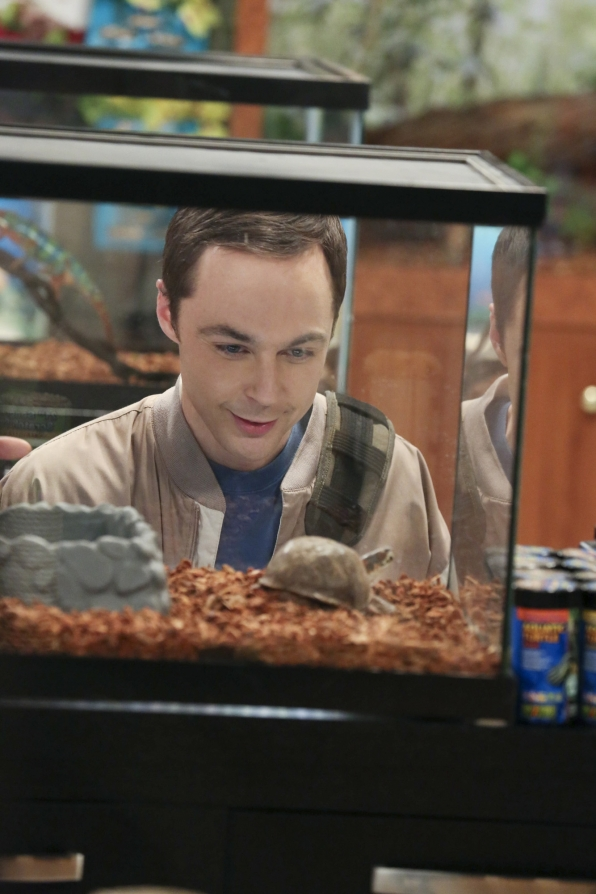 sheldon finds perfect turtle for big bang theory 2015