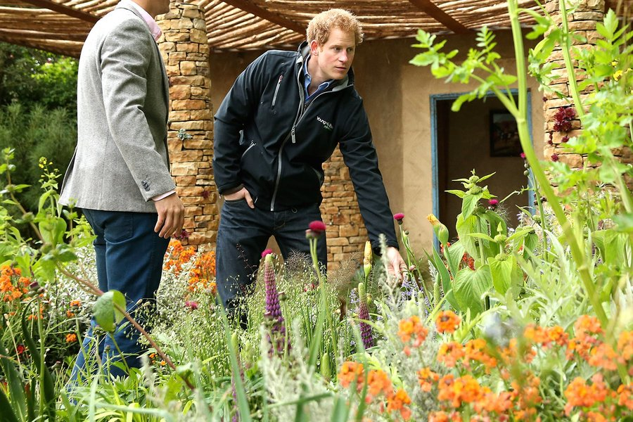 prince harry at chelsea flower show 2015 gossip