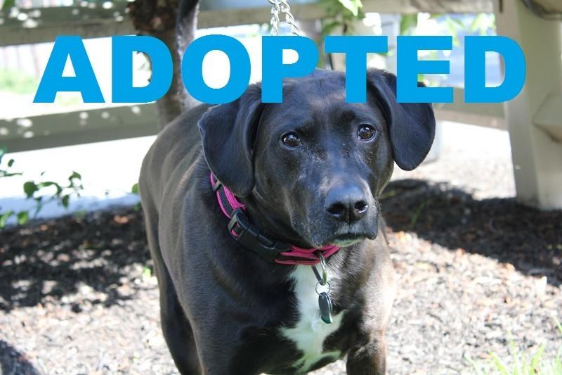 meet bandit adoptable pets movie tv tech geeks 2015