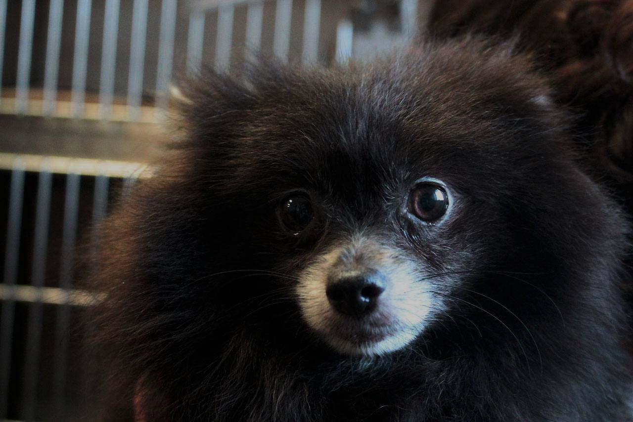 meet mississippi adoptable dog movie tv tech geeks 2015
