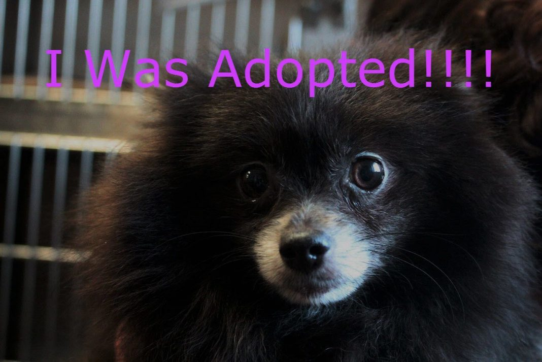 mississippi adopted