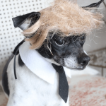 donald trump pet costume