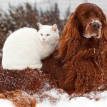 Gettings Your Pets Ready For Cold Weather