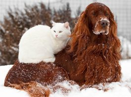 getting pets ready for cold weather movie tv tech 2015