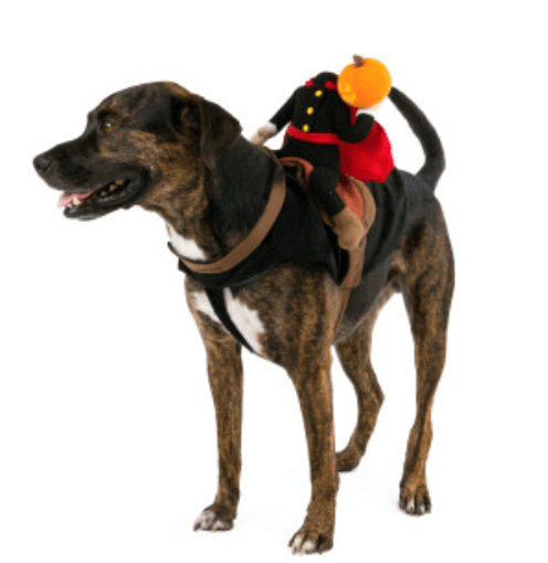headless horseman pet costume