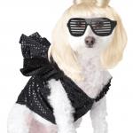 lady gaga pup