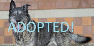 meet daisy cropped 2015 adopted