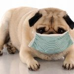 Prepare Your Pet for Flu Season