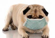 prepare your pet for flu season 2015 rescus me images