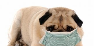 prepare your pet for flu season 2015 rescus me images
