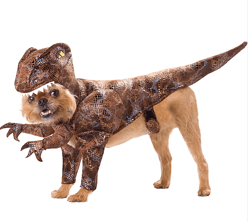 raptor pet costume halloween
