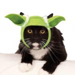 star wars cat yoda ears