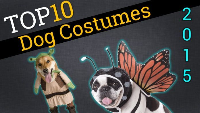top 10 pet costumes 2015 dogs