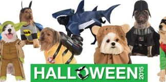 most adorable pet costumes 2015 images