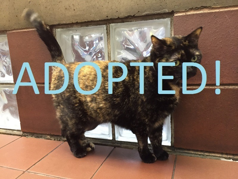 whispie movie tv tech geeks adopt me pet (5) ADOPTED