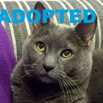 ADOPTED: Meet Chase: Animal League America's Latest Pet