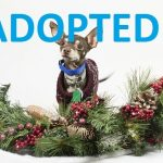 Meet Tom: Animal League America's Latest Pet Ready To Be Adopted this Holiday Season