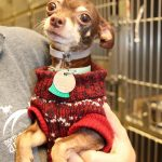 tom adopt me pets 2015 movie tv tech geeks