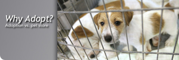 adopting of rescue animals vs pet store 2015 nsala mttg