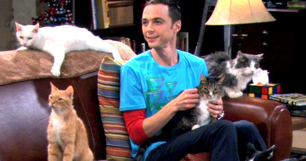 big bang theory soft kitty stolen kitty lawsuit hits 2015 images