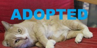 meet chika nsalas latest pet ready to be adopted 2016 mttg