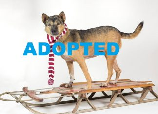 meet didi nsalas latest adoptable pet movie tv tech geeks 2015 ADOPTED