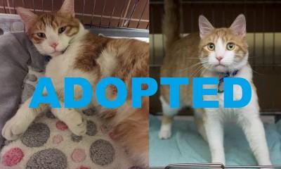 meet-scout-nsalas-latest-adoptable-pet-2015-images