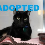 ADOPTED: Meet Corky, NSALA's Latest Pet Cat