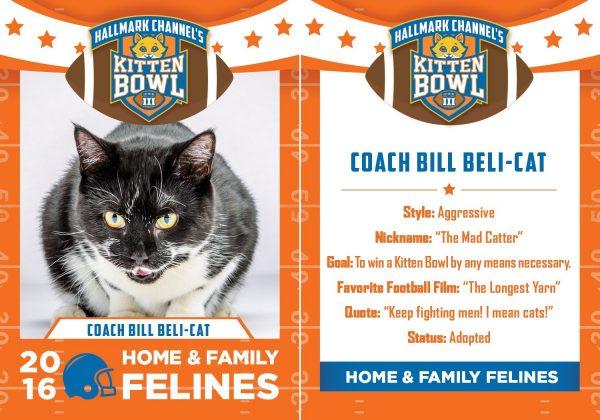 coach bill belachick cat version