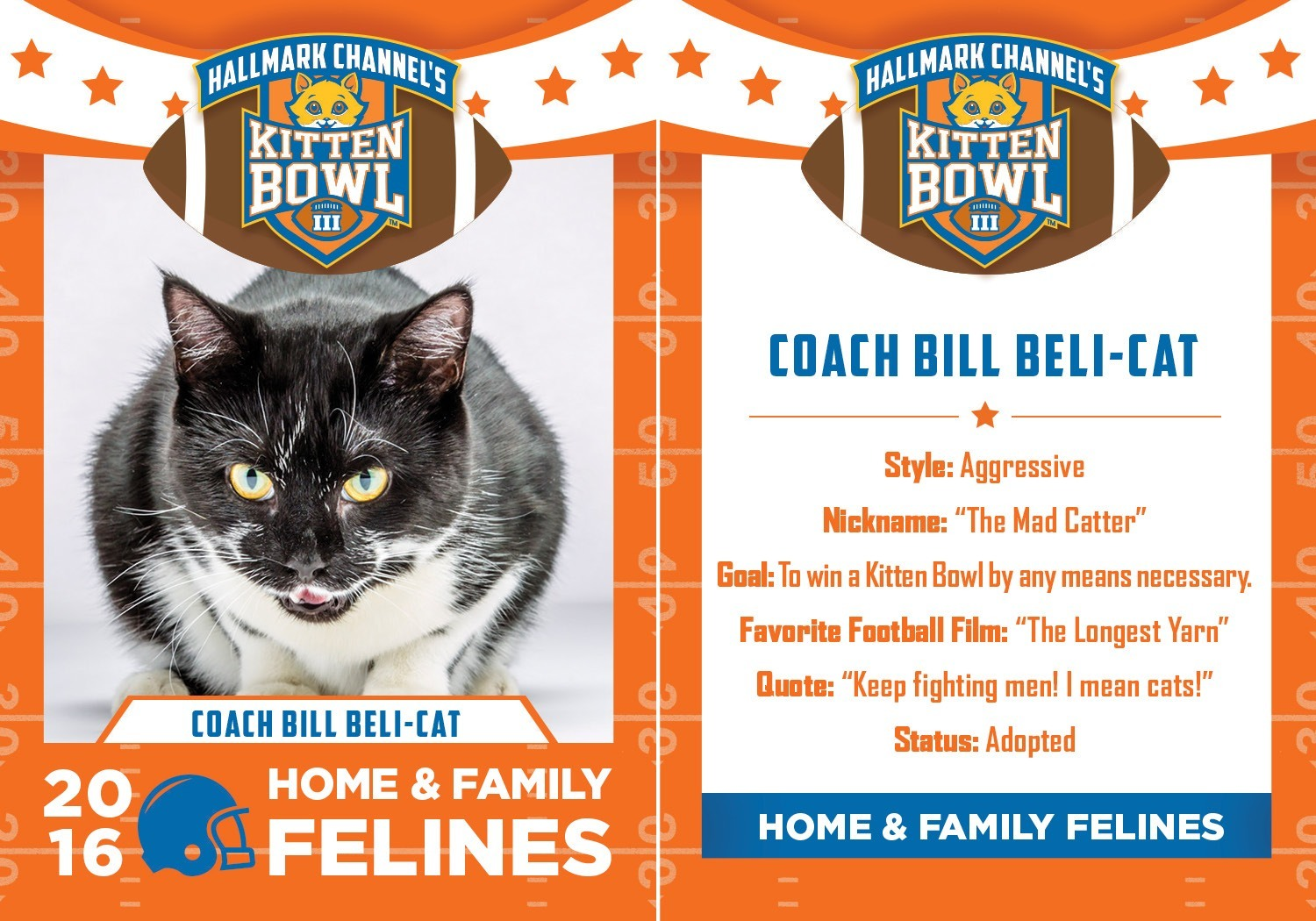 coach bill belachick cat version