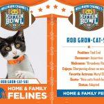 rob gronkowski kitten bowl III images