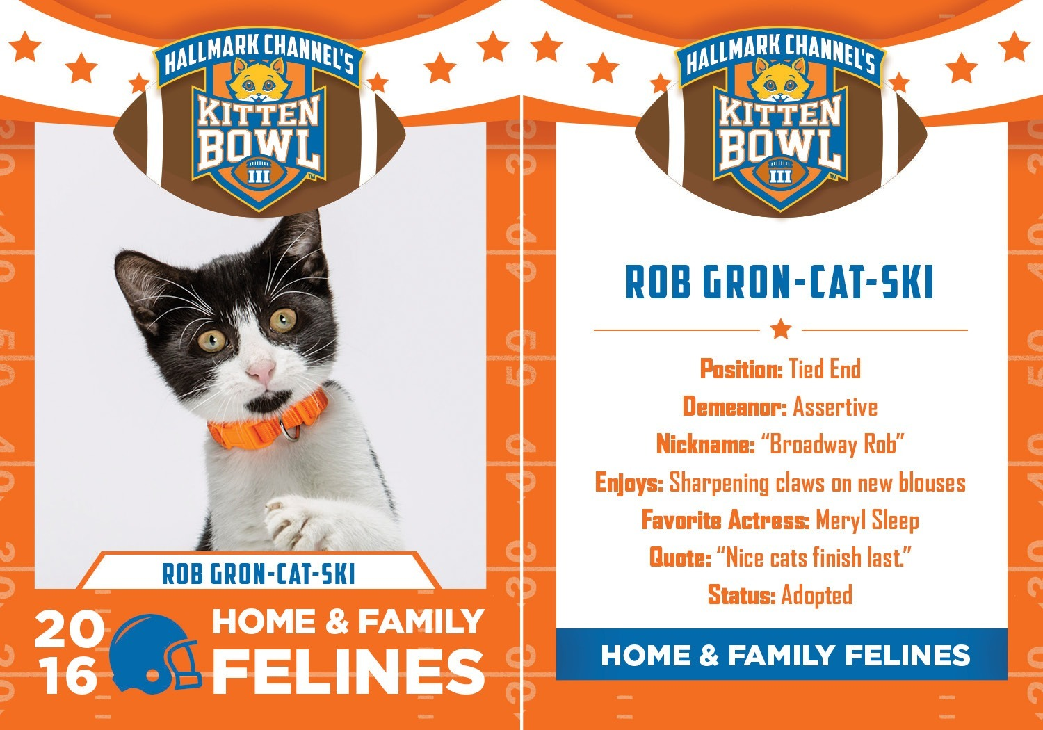 rob gronkowski kitten bowl III images