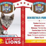 ben roeths kitten bowl 3 cat