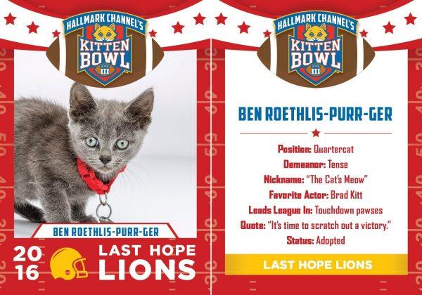 ben roeths kitten bowl 3 cat