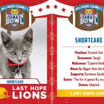 kitten bowl iii shortcake tackle