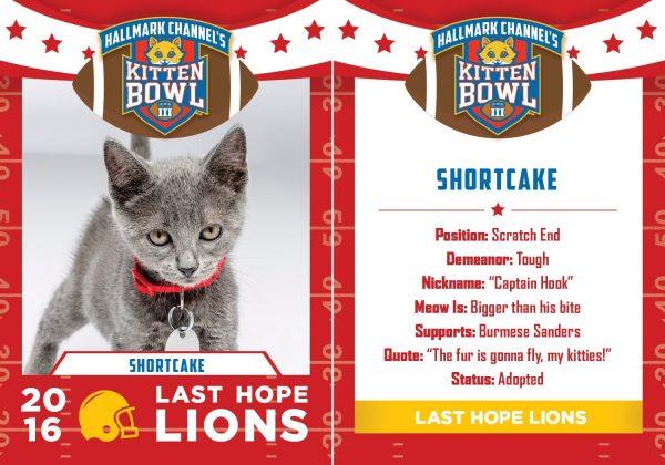 kitten bowl iii shortcake tackle