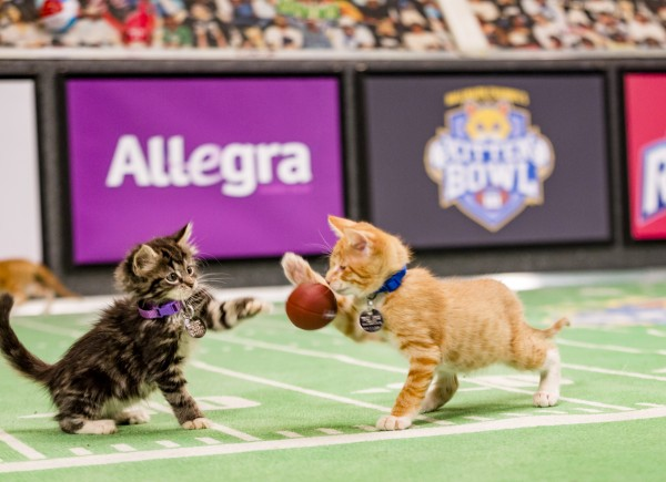 kitten bowl iii kitties movie tv tech geeks