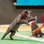 kitten bowl 3 catnip snip