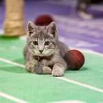 Kitten Bowl III laying down for kick