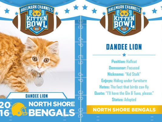 dandee lion for kitten bowl III