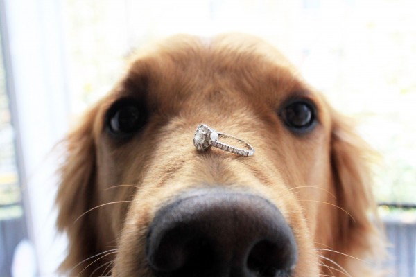 dog with diamond