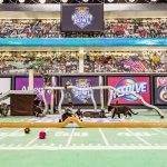 kitten bowl 3 vs super bowl