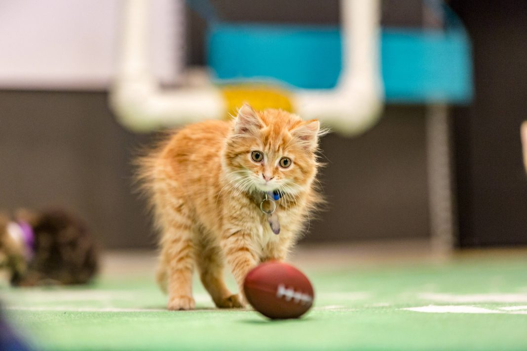 kitten bowl III howie long hair plays 2016